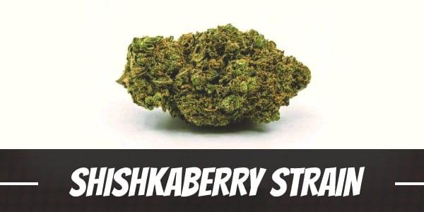 Shishkaberry Strain