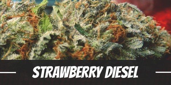 Strawberry Diesel Strain