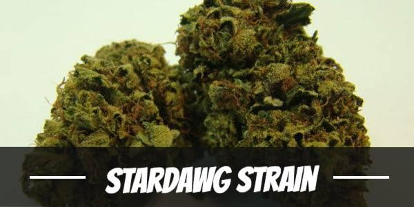 Stardawg Strain