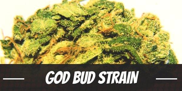 God Bud Strain