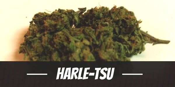 Harle-Tsu Strain