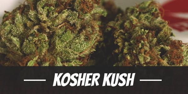 Kosher Kush Strain