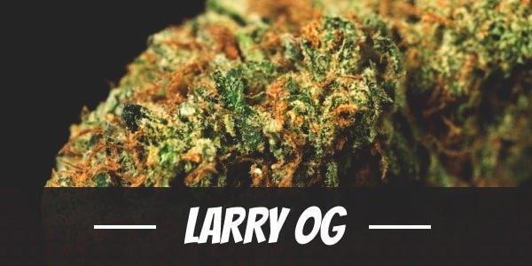 Larry OG Strain
