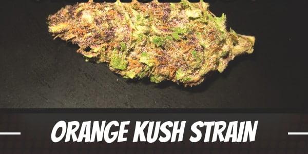 Orange Kush Strain