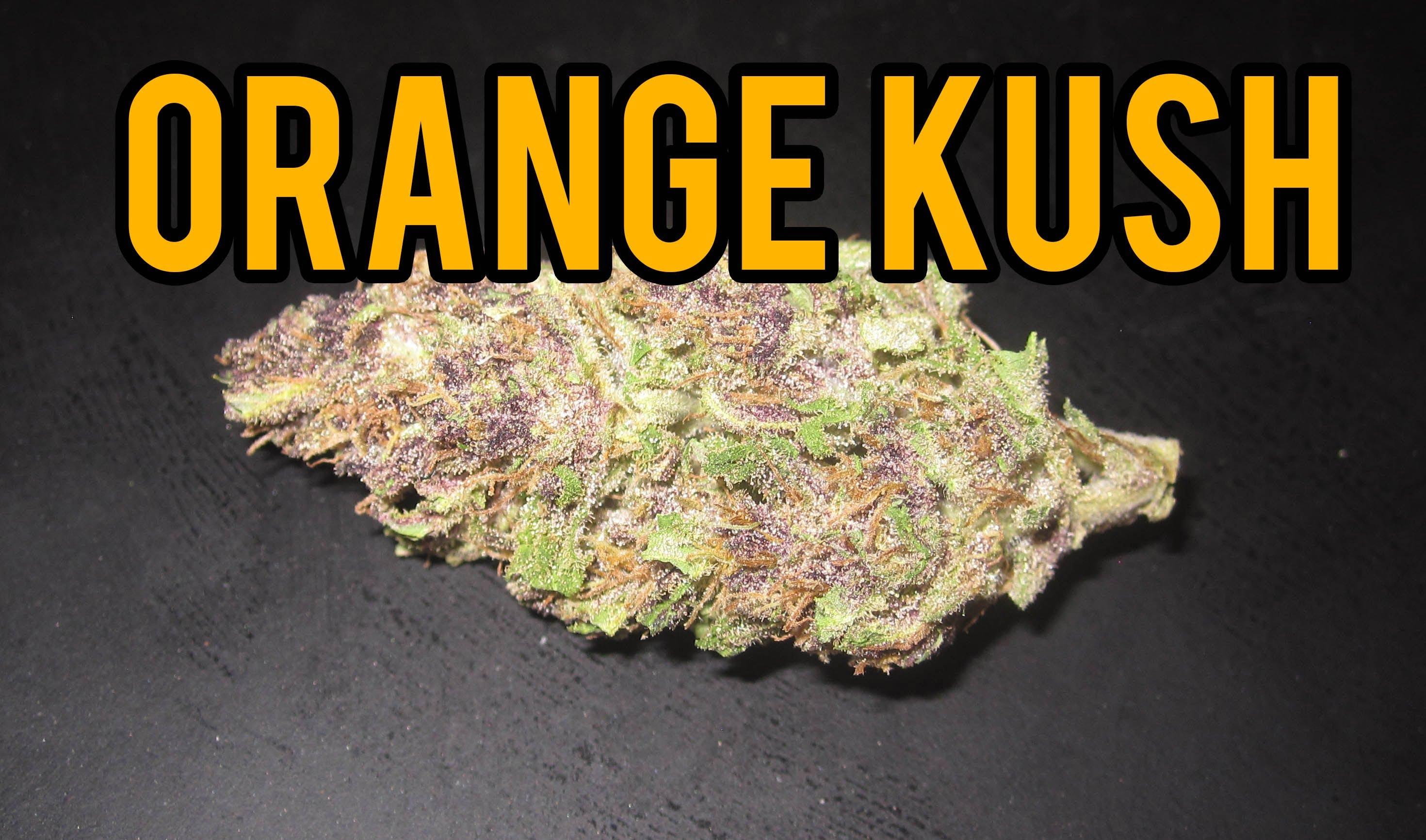 Orange Kush Strain Review - I Love Growing Marijuana