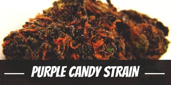 Purple Candy Strain