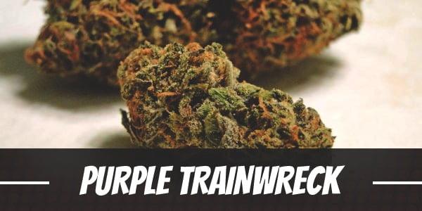 Purple Trainwreck Strain