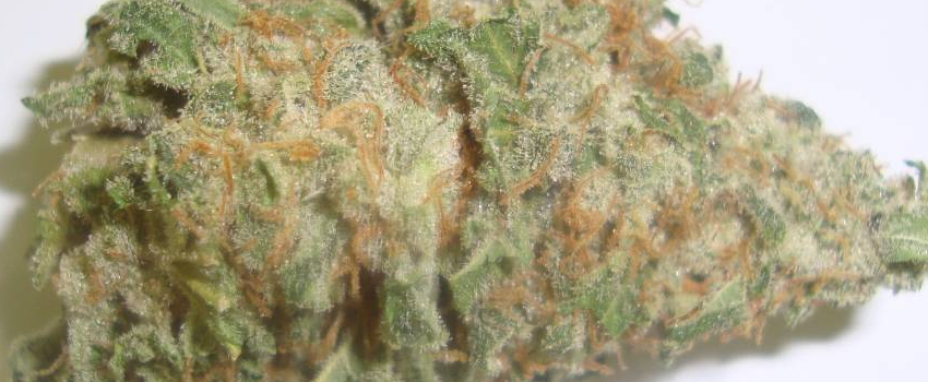 White Russian Effects Buy white russian weed online