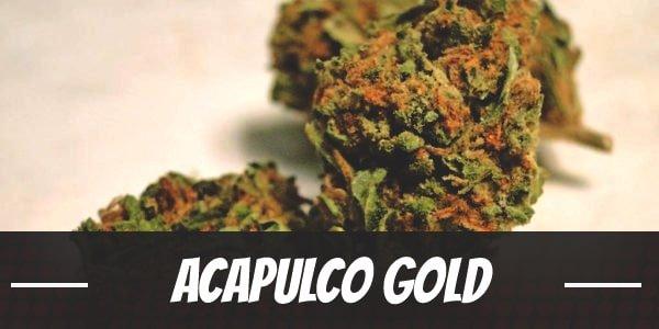 Acapulco Gold Strain