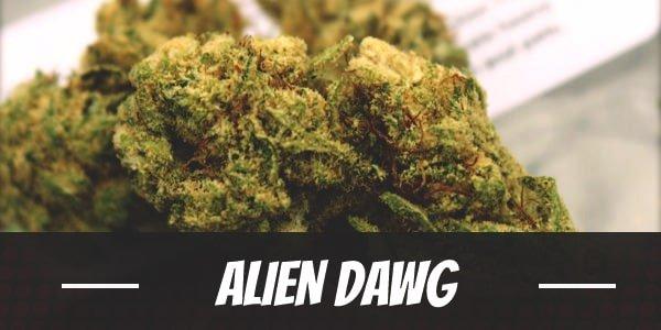 Alien Dawg Strain