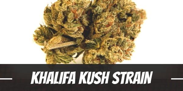 Khalifa Kush Strain