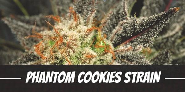 Phantom Cookies Strain