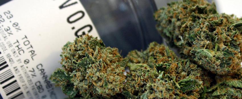 SFV OG Strain Review - I Love Growing Marijuana