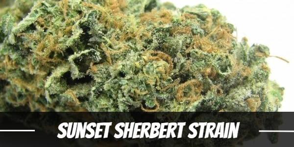 Sunset Sherbert Strain