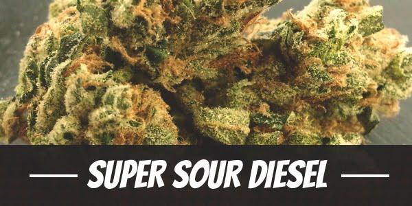 Super Sour Diesel Strain