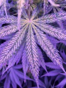 plant leaves decoloration