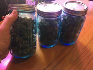 plants bottled