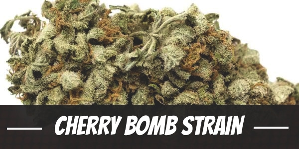 Cherry Bomb Strain Complete Guide Review