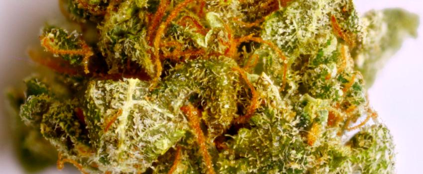 Pot_of_Gold_Effects Buy pot of gold marijuana online