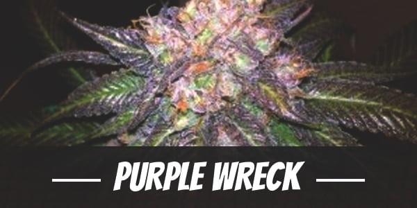 Purple Wreck Strain
