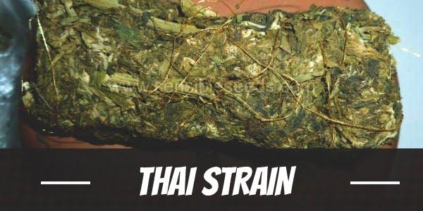 Thai Strain