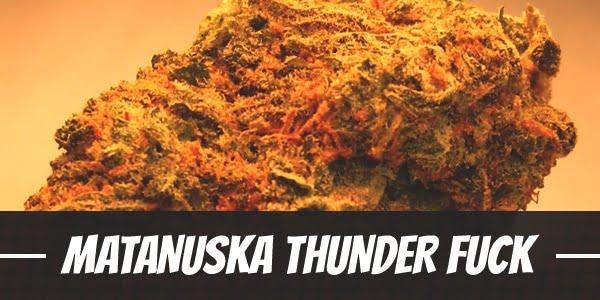 Matanuska Thunder Fuck Strain