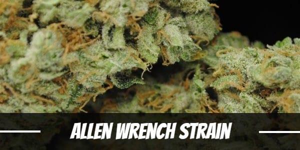 Allen Wrench Strain