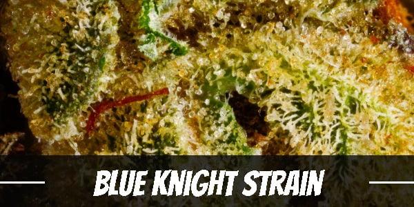 Blue Knight Strain