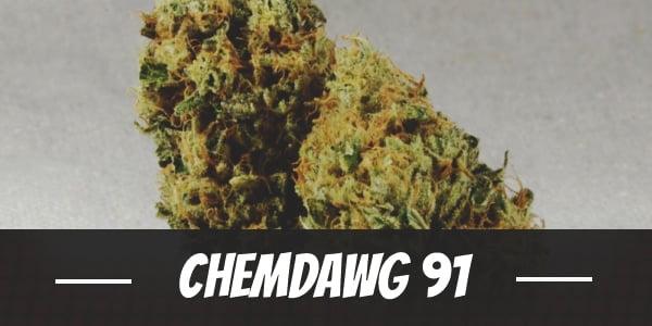 Chemdawg 91 Strain