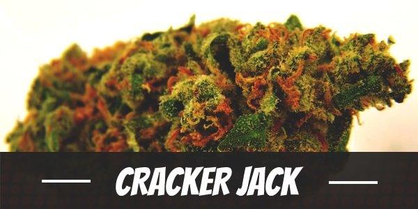 Cracker Jack Strain