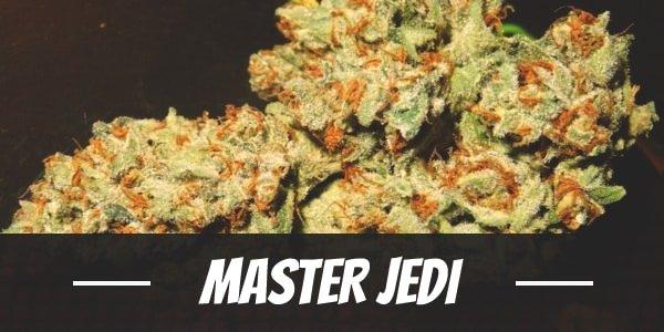 Master Jedi Strain