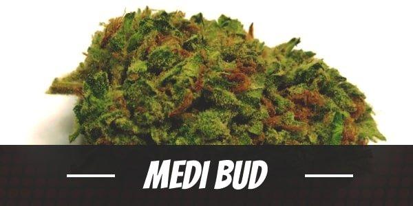 Medi Bud Strain
