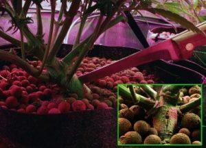 both plants
