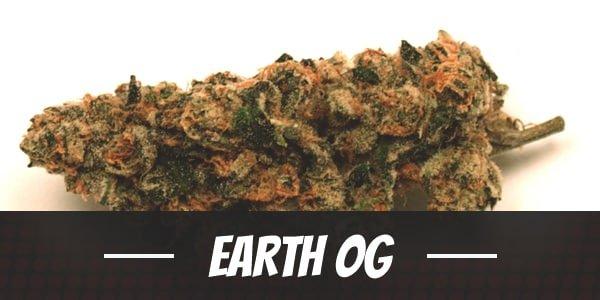 Earth OG Strain