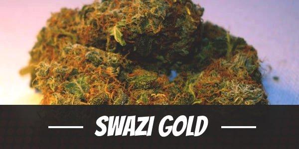 Swazi Gold Strain