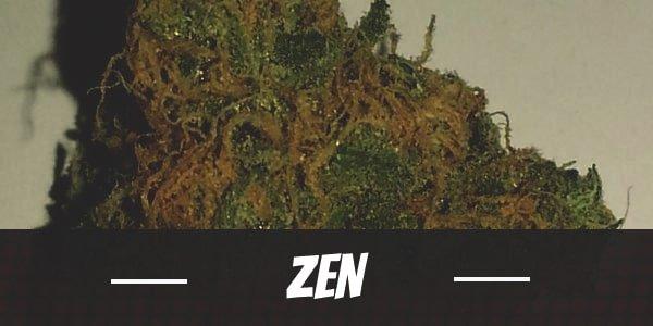Zen Strain