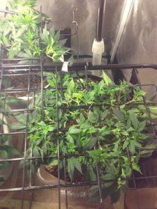 plants need