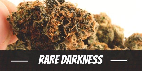 Rare Darkness Strain