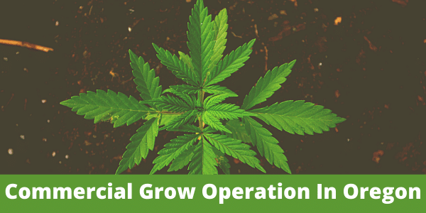 How to start a commercial grow operation in Oregon