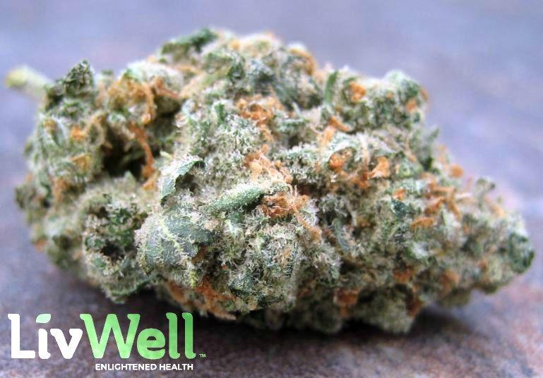 Jack 47 Strain Review - I Love Growing Marijuana
