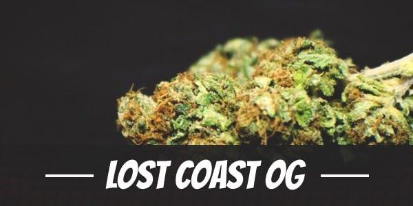 Lost Coast OG Strain
