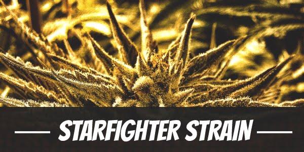 Starfighter Strain