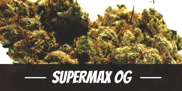 Supermax OG Strain