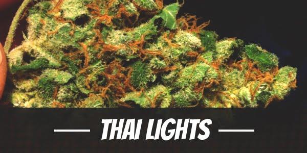 Thai Lights Strain