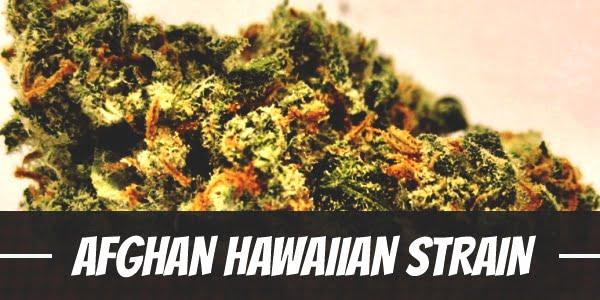 Afghan Hawaiian Strain