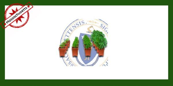 Growing marijuana in Massachusetts
