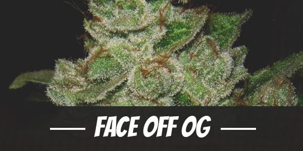 Face Off OG Strain