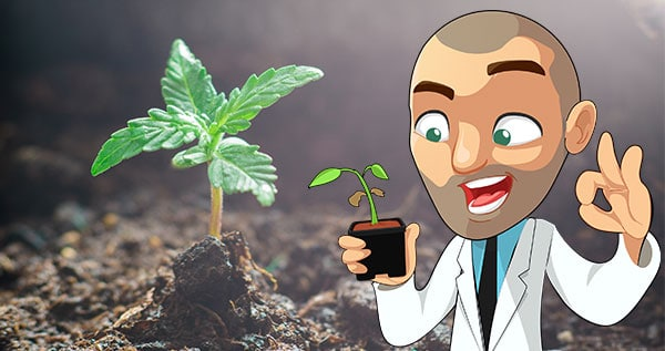 How To Germinate Marijuana Seeds