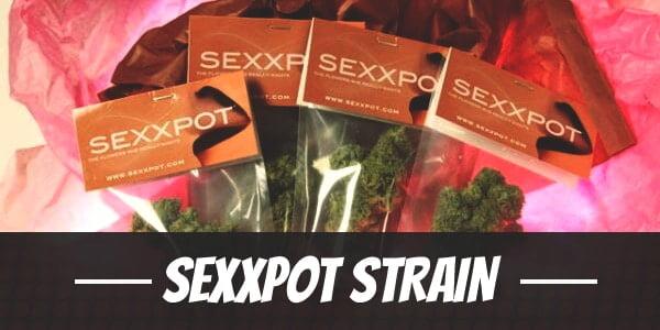Sexxpot Strain