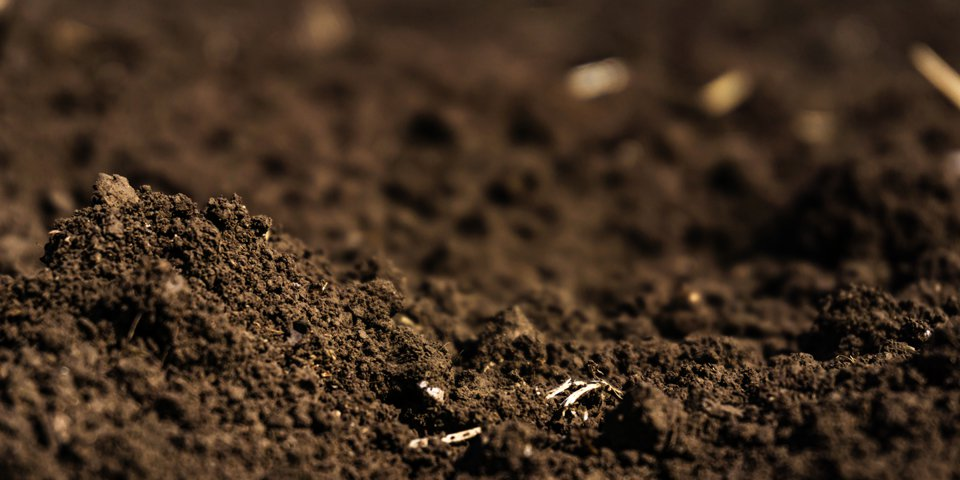 Best Soil for Growing Marijuana